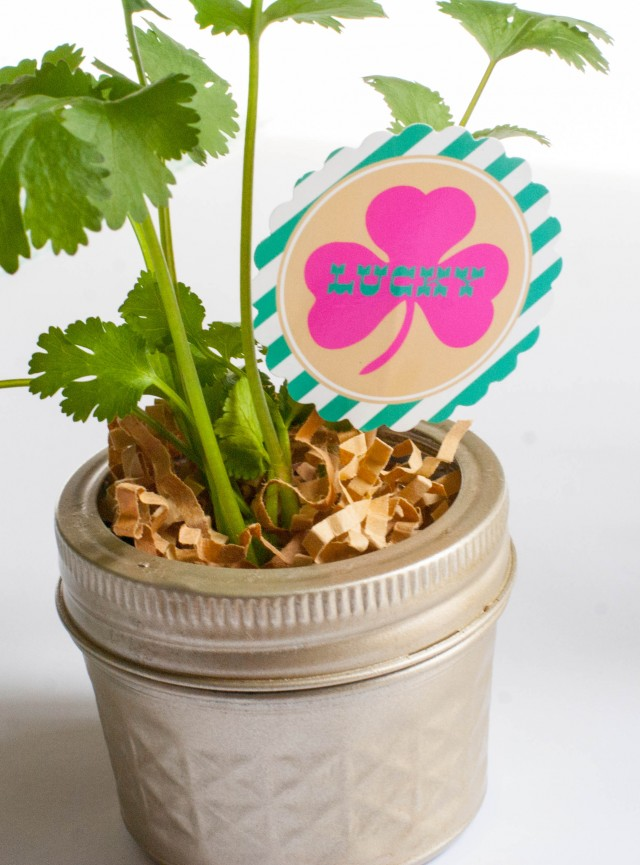 st-patricks-day-gold-mason-jars-cilantro-printables-pot-of-gold-lucky-clover