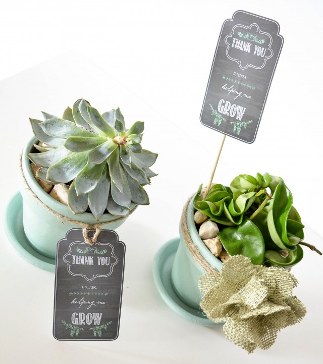 Gift Plants And Plant Ideas Perfect Container Garden For You: Ruff Draft: End Of The Year Teacher Gift And FREE