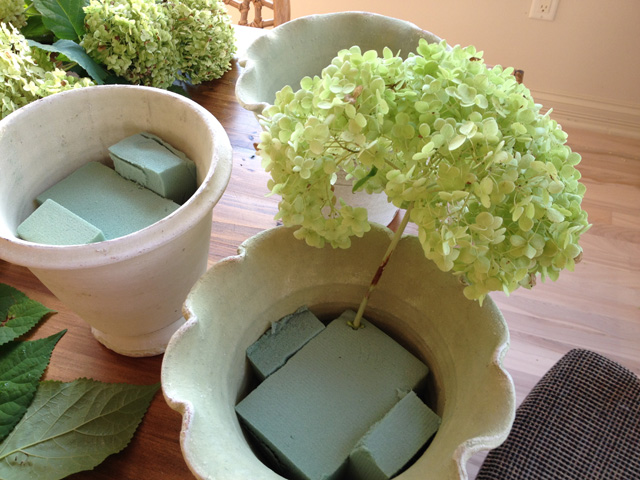 arranging dried hydrangeas