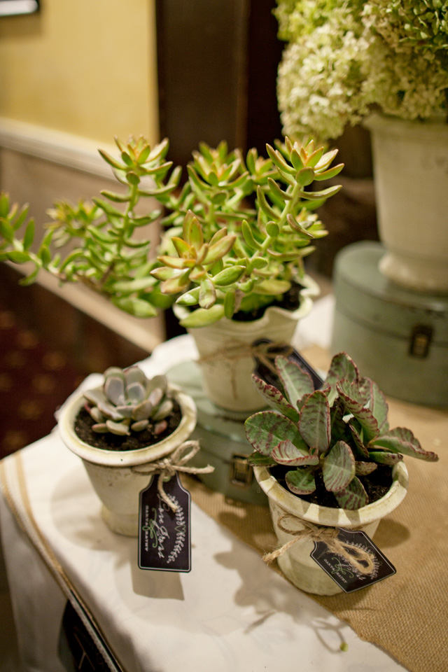 anniversary party succulents