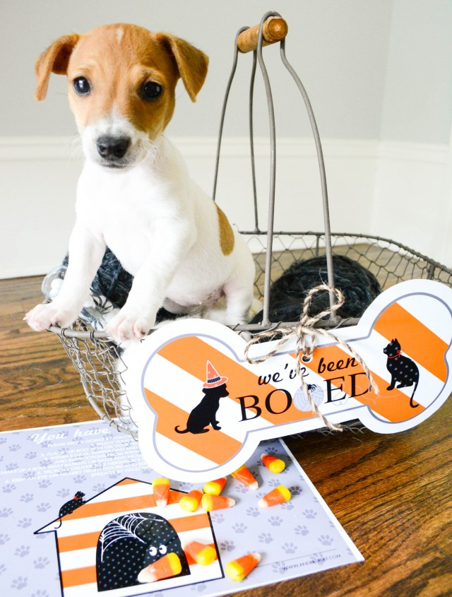 puppies boo sign